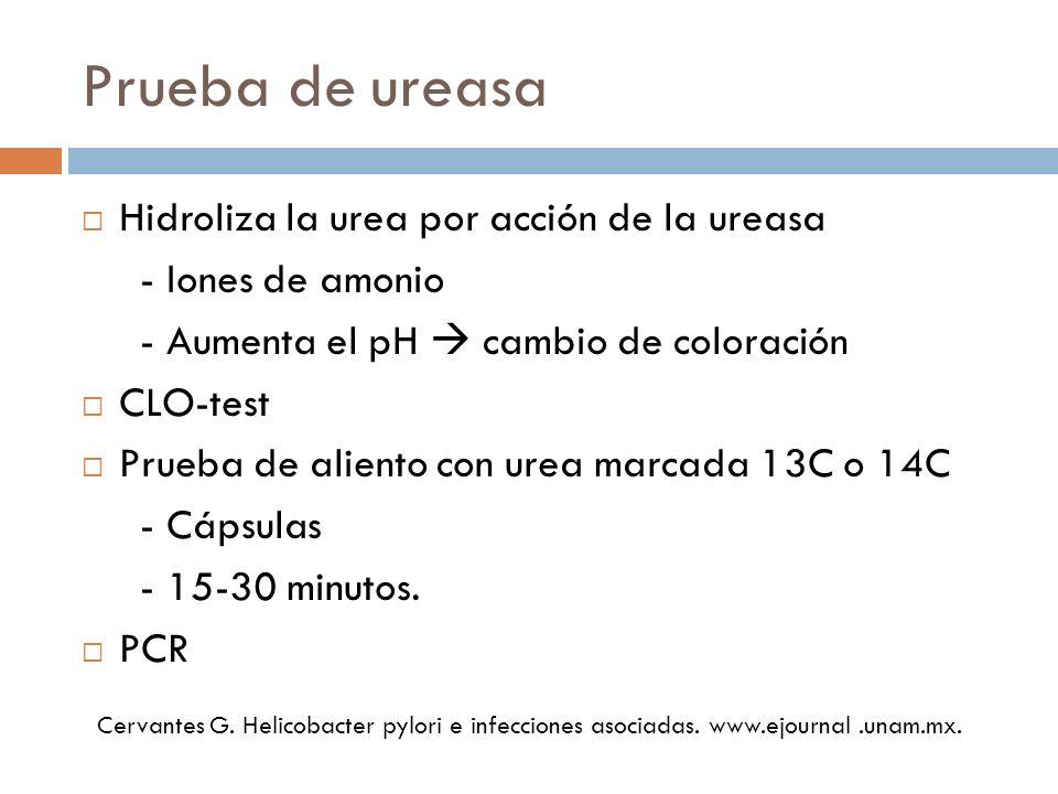Prueba de ureasa Hidroliza la urea por acción de la ureasa