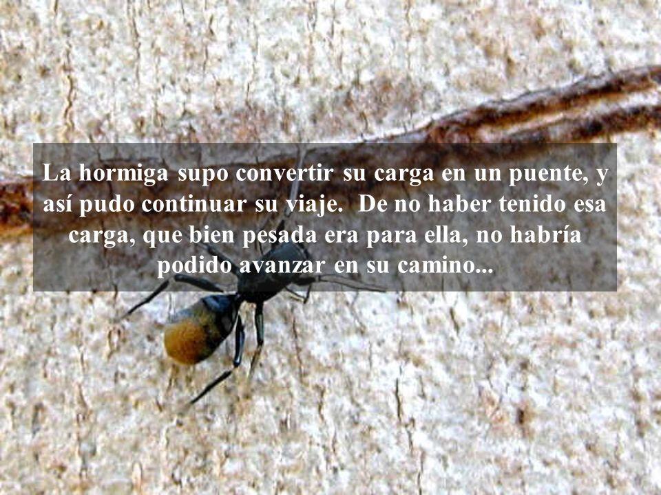 La hormiga supo convertir su carga en un puente, y así pudo continuar su viaje. De no haber tenido esa carga, que bien pesada era para ella, no habría podido avanzar en su camino...