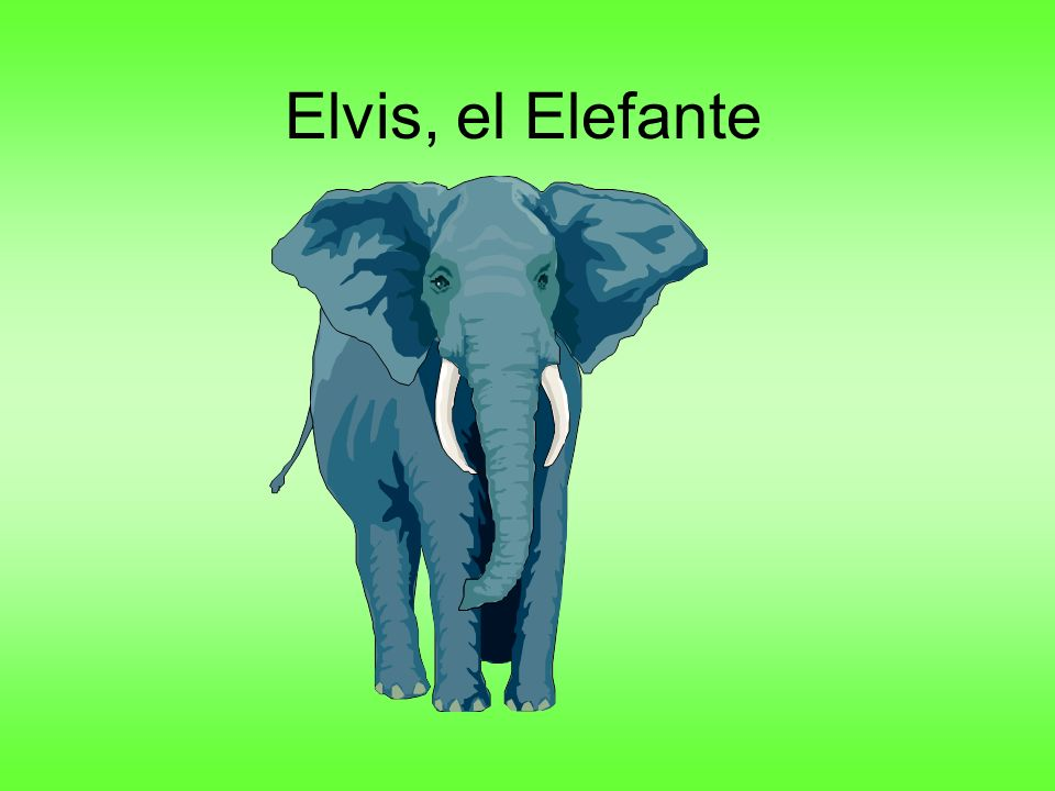 El elefante inserta el tronco en la vagina