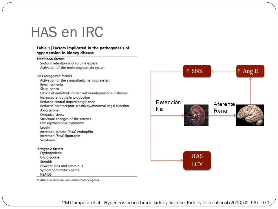 HAS en IRC SNS Ang II HAS ECV Retención Na Aferente Renal