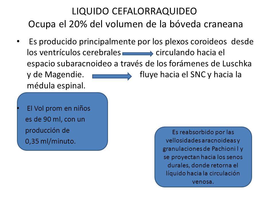 LIQUIDO CEFALORRAQUIDEO Ocupa el 20% del volumen de la bóveda craneana