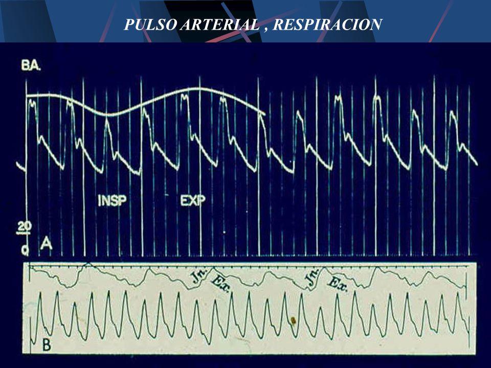 PULSO ARTERIAL , RESPIRACION