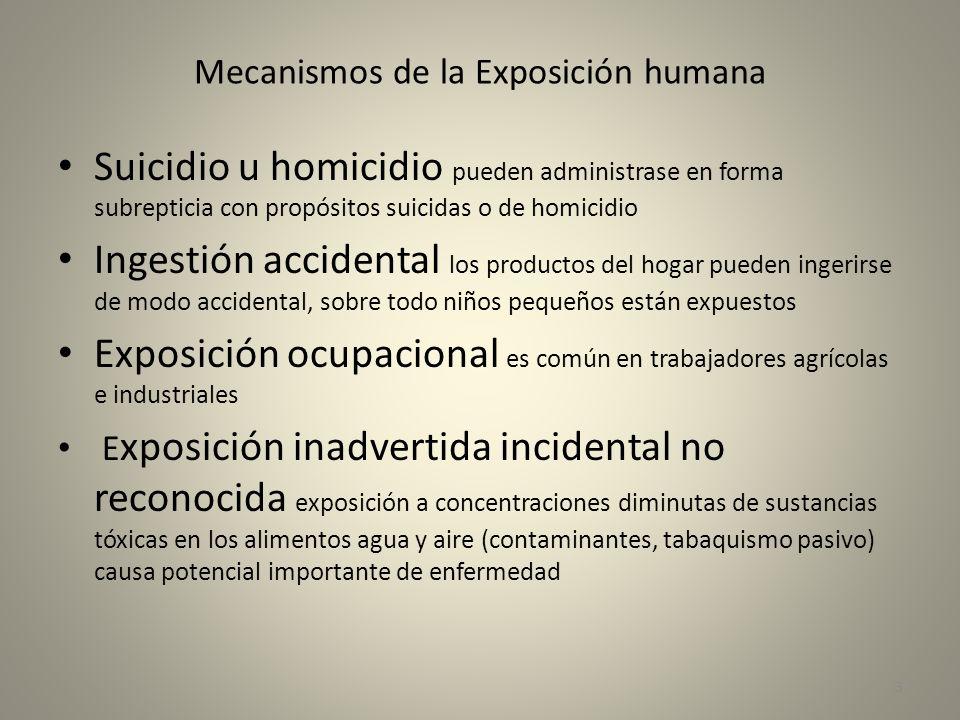 Mecanismos de la Exposición humana