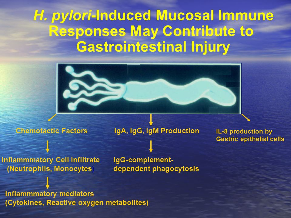 H. pylori-Induced Mucosal Immune Responses May Contribute to