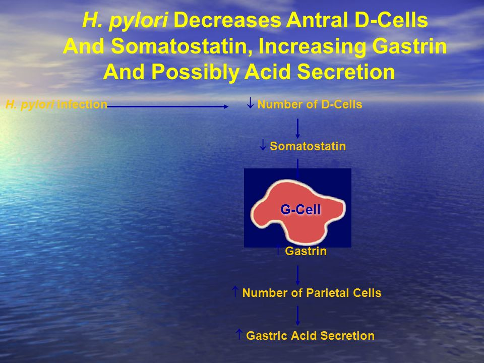 H. pylori Decreases Antral D-Cells