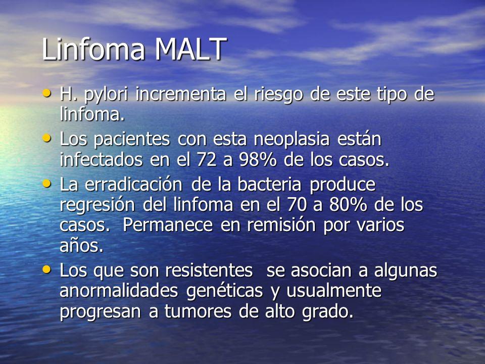 Linfoma MALT H. pylori incrementa el riesgo de este tipo de linfoma.
