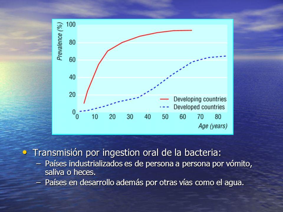 Transmisión por ingestion oral de la bacteria: