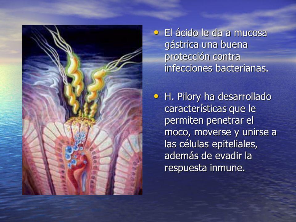 El ácido le da a mucosa gástrica una buena protección contra infecciones bacterianas.