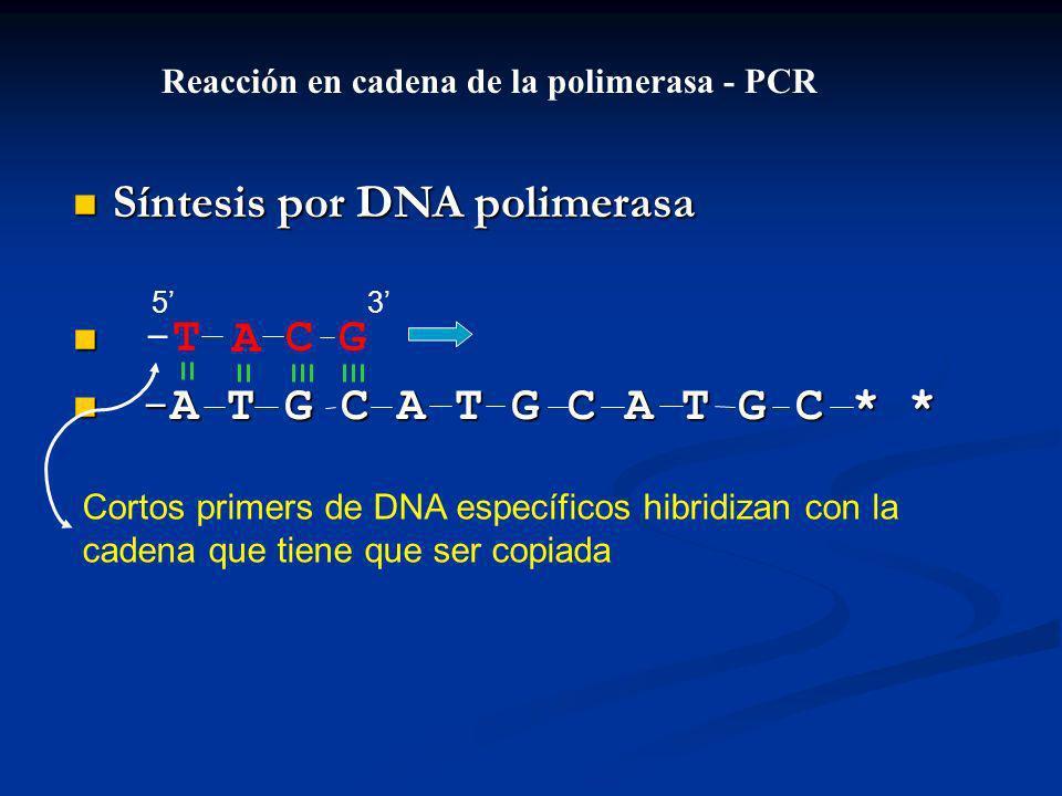 Síntesis por DNA polimerasa