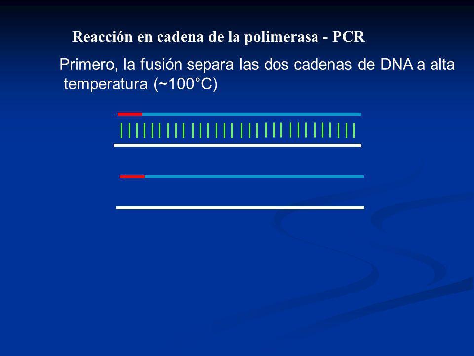 Reacción en cadena de la polimerasa - PCR