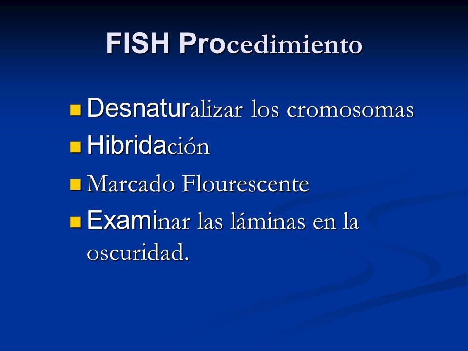 FISH Procedimiento Desnaturalizar los cromosomas Hibridación