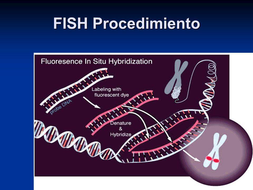 FISH Procedimiento