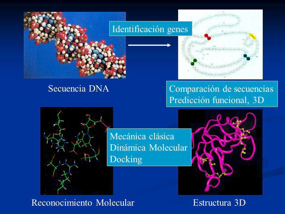 Identificación genes Comparación de secuencias. Predicción funcional, 3D. Mecánica clásica. Dinámica Molecular.