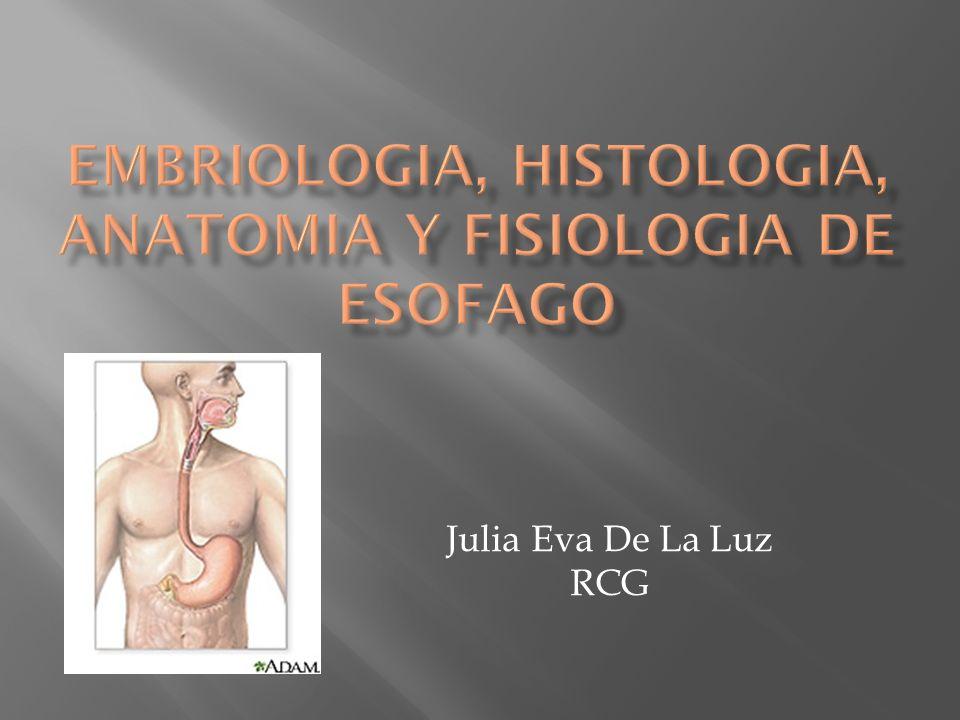 EMBRIOLOGIA, HISTOLOGIA, ANATOMIA y FISIOLOGIA DE ESOFAGO