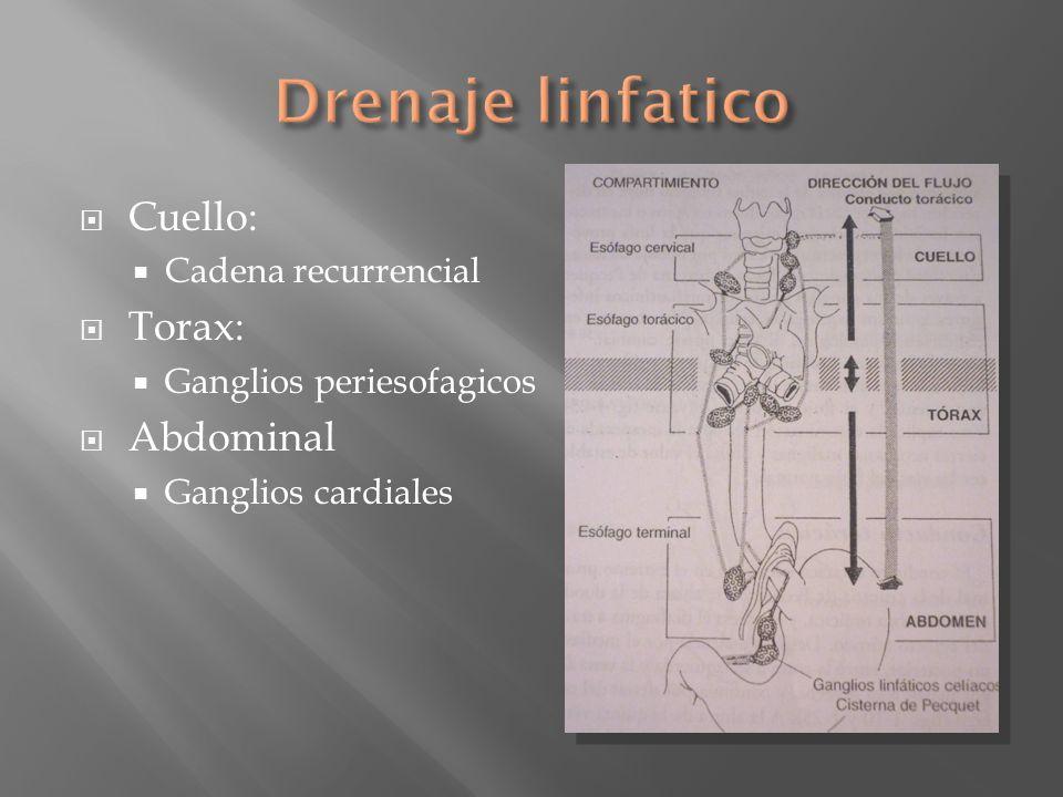 Drenaje linfatico Cuello: Torax: Abdominal Cadena recurrencial