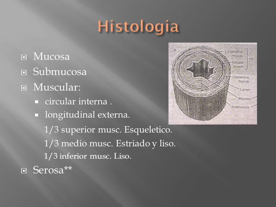 Histologia Mucosa Submucosa Muscular: 1/3 superior musc. Esqueletico.