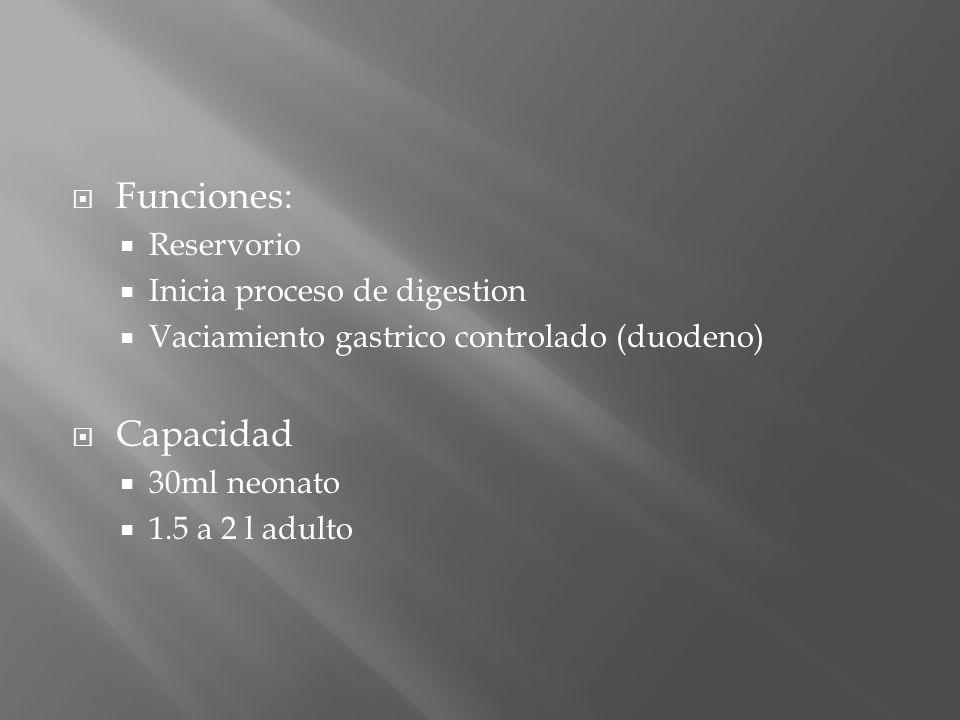 Funciones: Capacidad Reservorio Inicia proceso de digestion