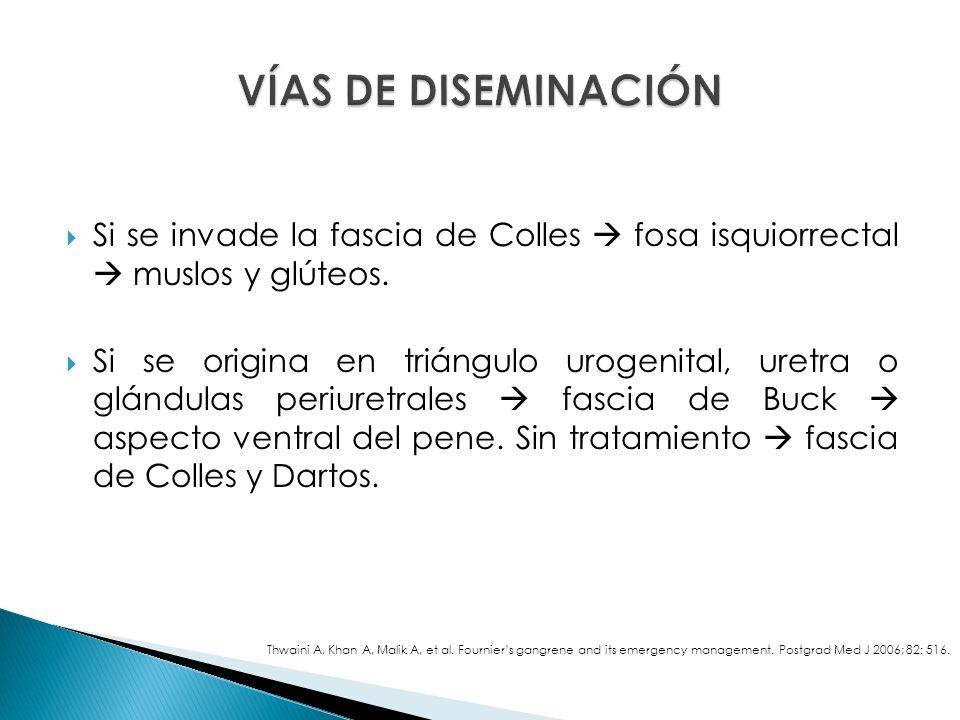 VÍAS DE DISEMINACIÓN Si se invade la fascia de Colles  fosa isquiorrectal  muslos y glúteos.