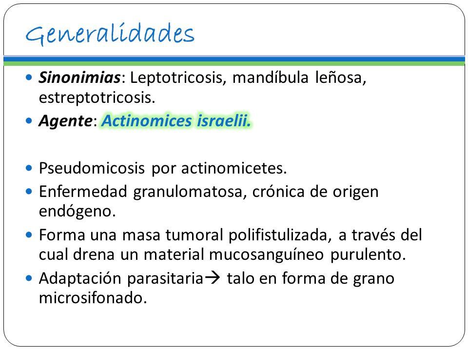 Generalidades Sinonimias: Leptotricosis, mandíbula leñosa, estreptotricosis. Agente: Actinomices israelii.