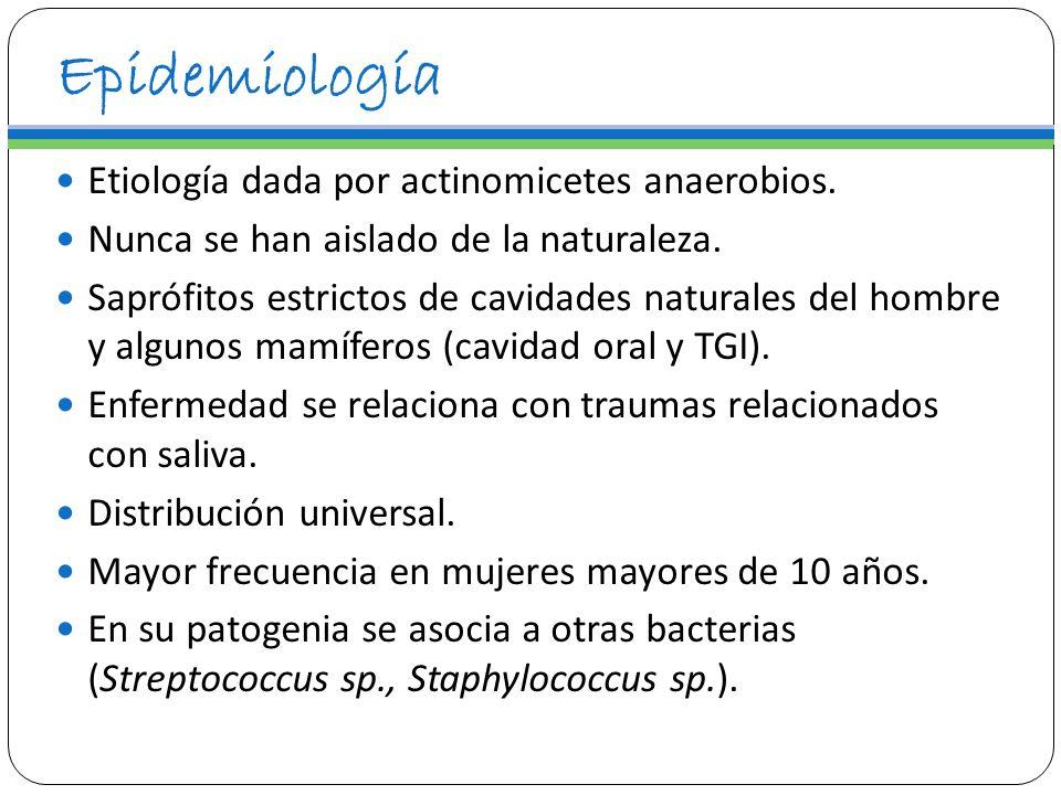Epidemiología Etiología dada por actinomicetes anaerobios.