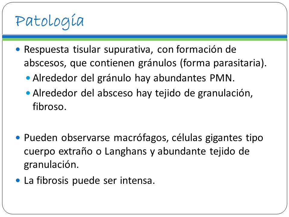 Patología Respuesta tisular supurativa, con formación de abscesos, que contienen gránulos (forma parasitaria).