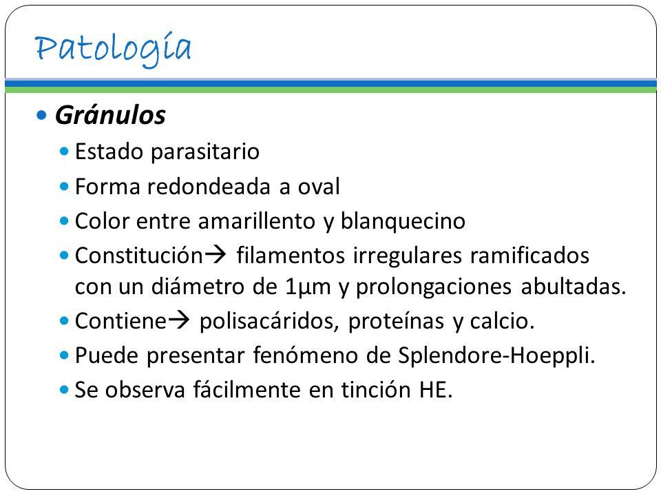Patología Gránulos Estado parasitario Forma redondeada a oval