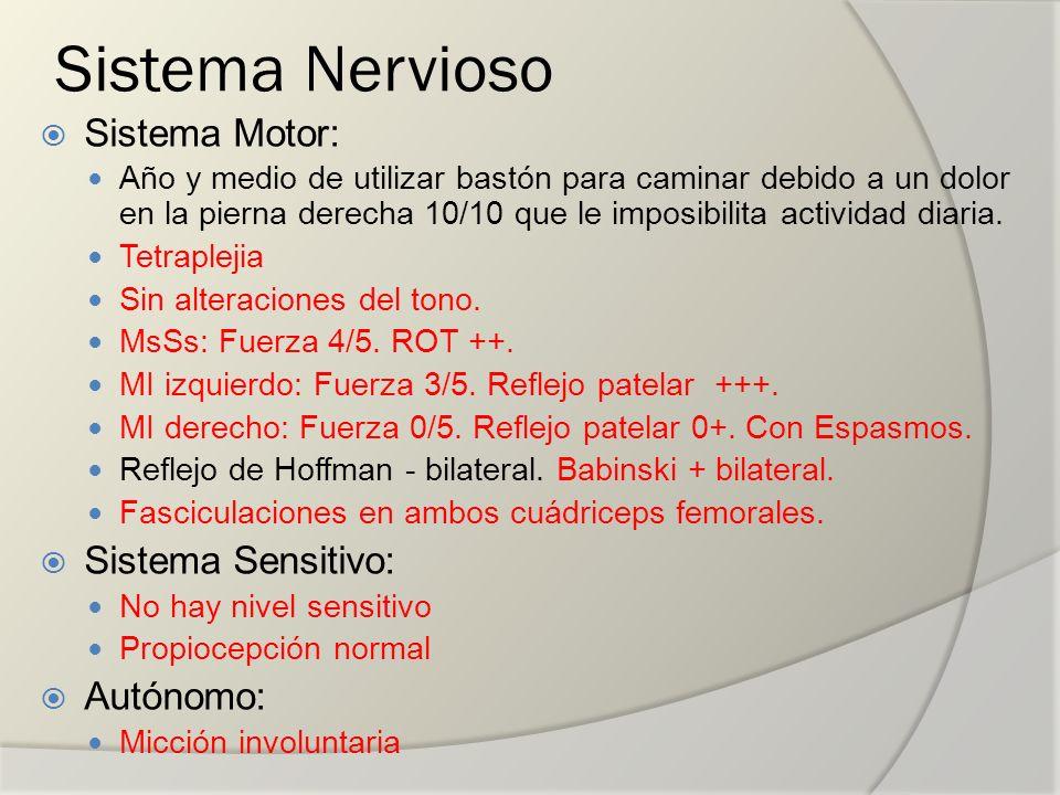 Sistema Nervioso Sistema Motor: Sistema Sensitivo: Autónomo:
