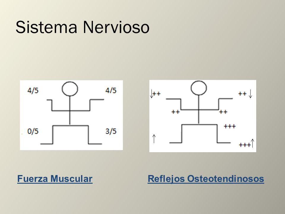 Sistema Nervioso Fuerza Muscular Reflejos Osteotendinosos