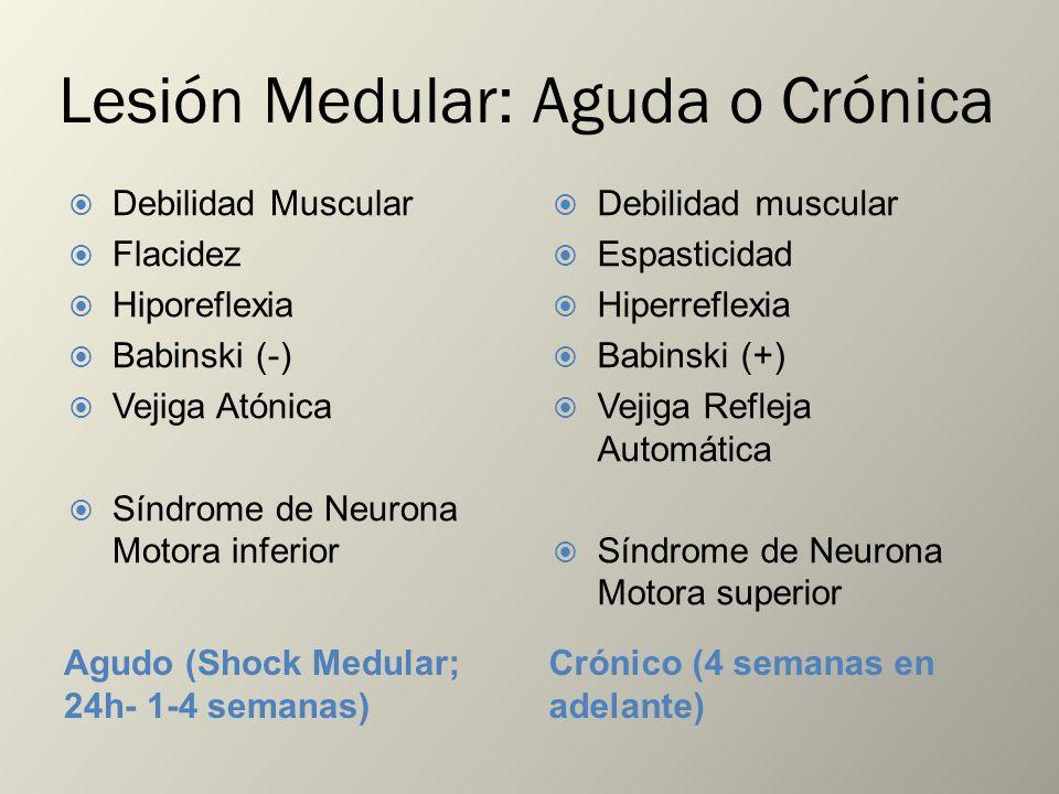 Lesión Medular: Aguda o Crónica