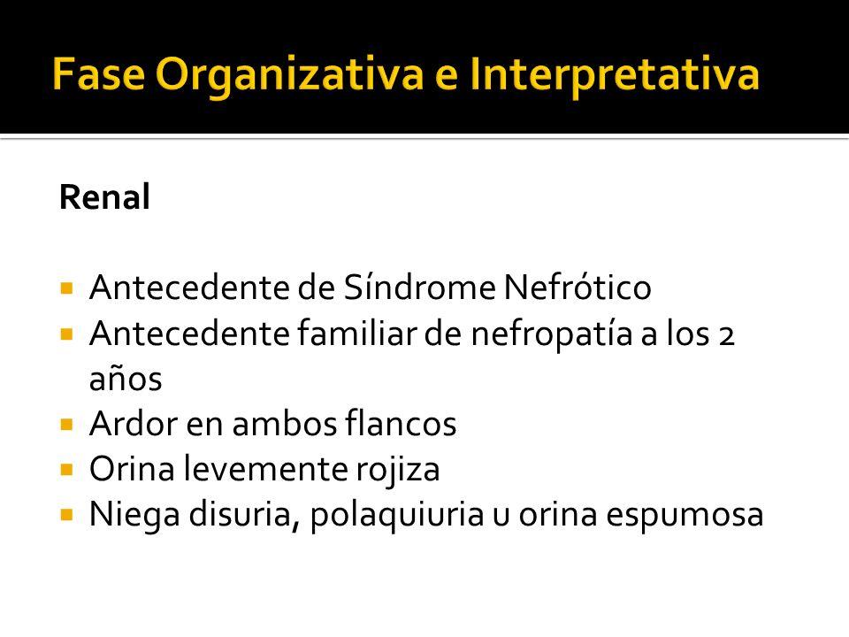 Fase Organizativa e Interpretativa