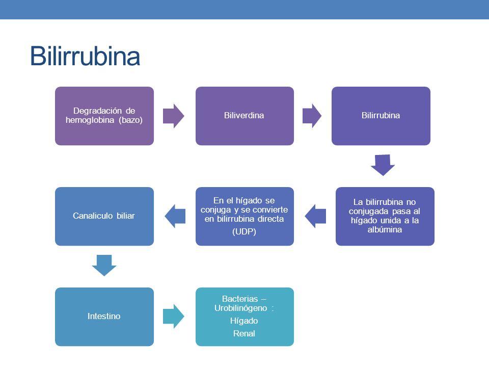 Bilirrubina Degradación de hemoglobina (bazo) Biliverdina Bilirrubina