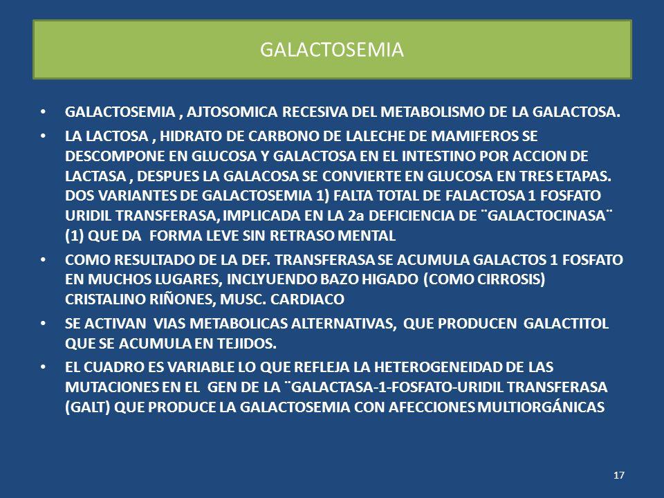 GALACTOSEMIA GALACTOSEMIA , AJTOSOMICA RECESIVA DEL METABOLISMO DE LA GALACTOSA.
