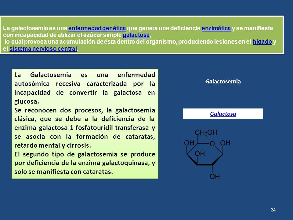 La galactosemia es una enfermedad genética que genera una deficiencia enzimática y se manifiesta