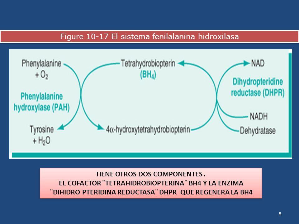 Figure 10-17 El sistema fenilalanina hidroxilasa