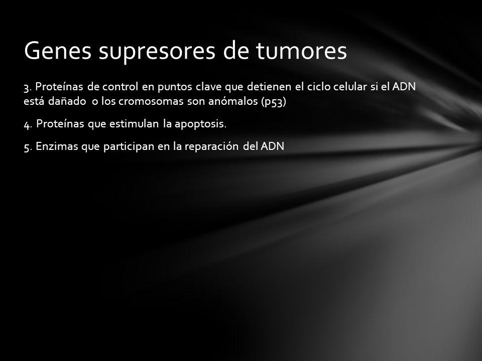 Genes supresores de tumores