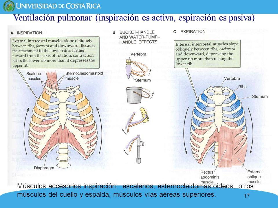 Ventilación pulmonar (inspiración es activa, espiración es pasiva)