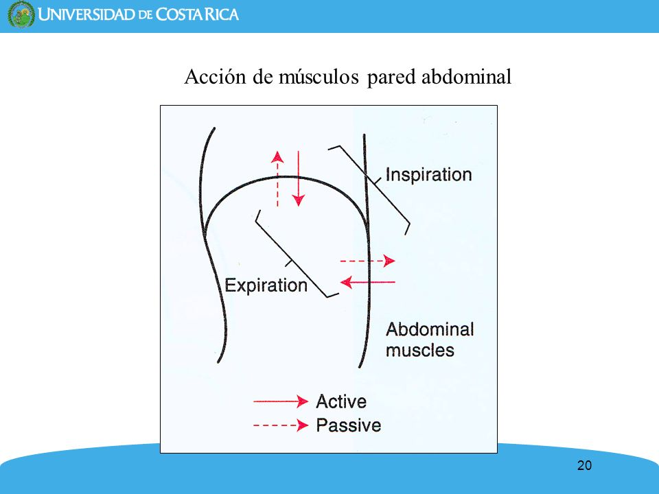 Acción de músculos pared abdominal