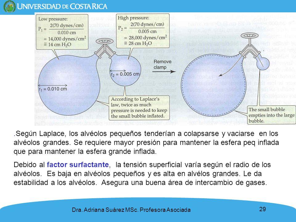 .Según Laplace, los alvéolos pequeños tenderían a colapsarse y vaciarse en los alvéolos grandes. Se requiere mayor presión para mantener la esfera peq inflada que para mantener la esfera grande inflada.