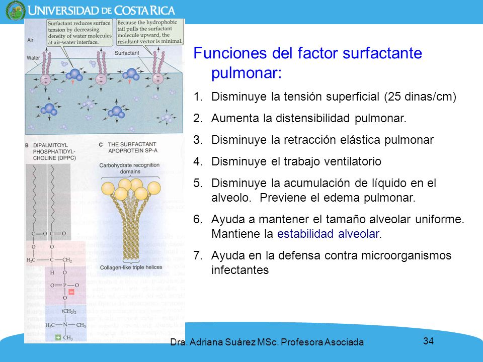 Funciones del factor surfactante pulmonar:
