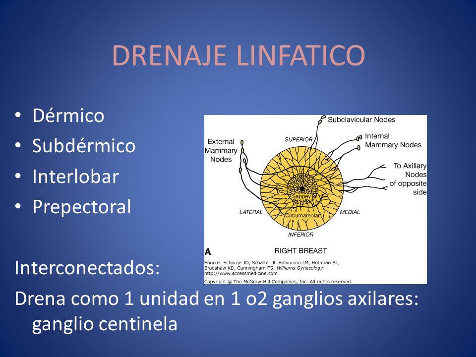 DRENAJE LINFATICO Dérmico Subdérmico Interlobar Prepectoral
