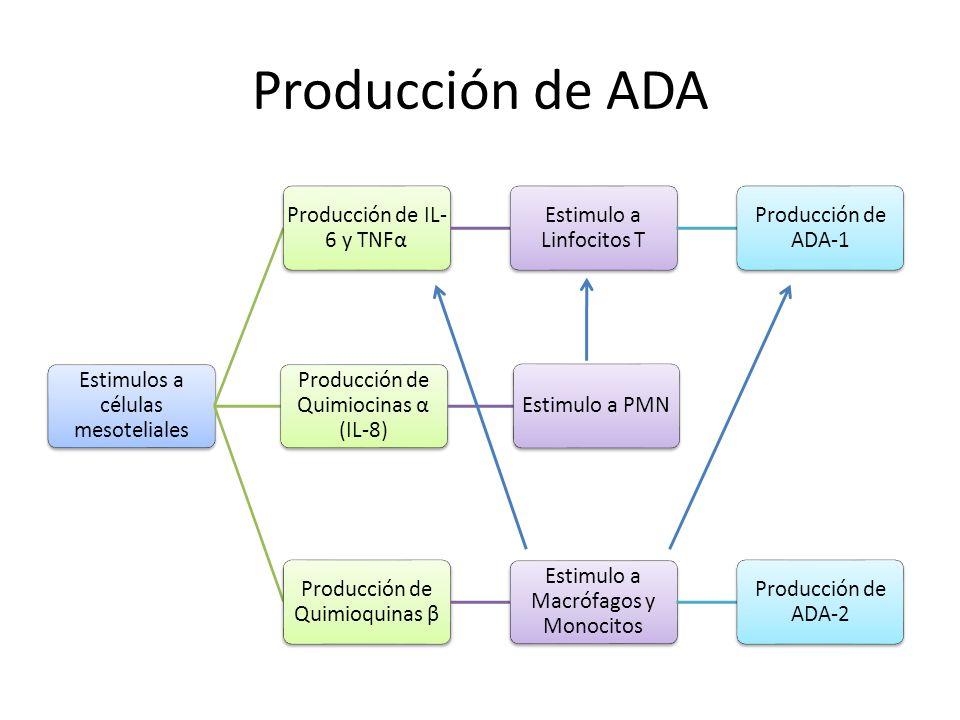 Producción de ADA Estimulos a células mesoteliales
