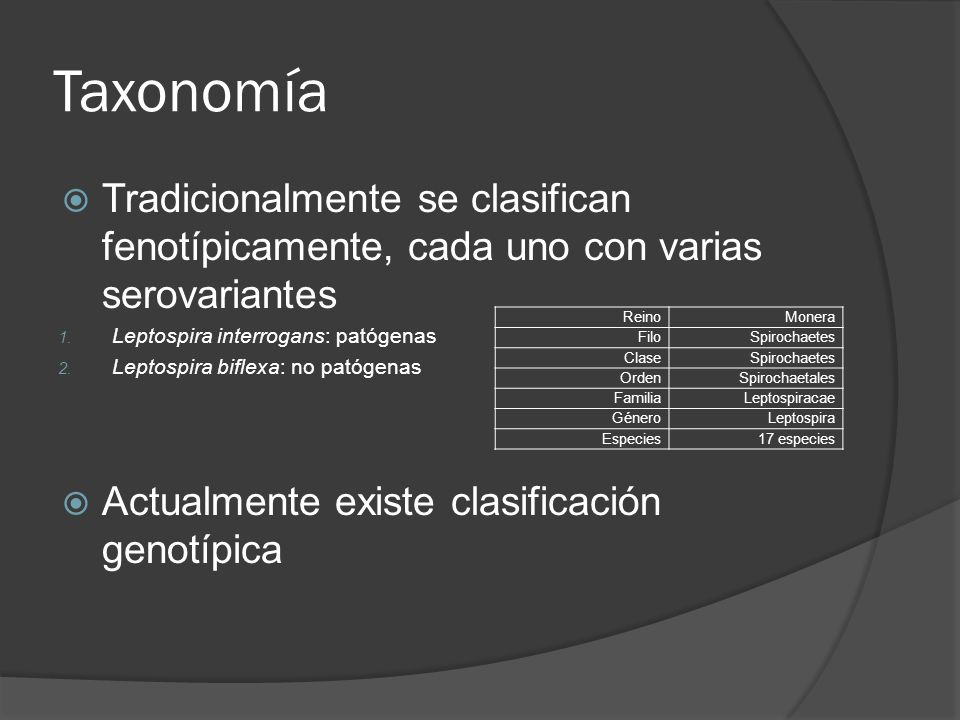 Taxonomía Tradicionalmente se clasifican fenotípicamente, cada uno con varias serovariantes. Leptospira interrogans: patógenas.