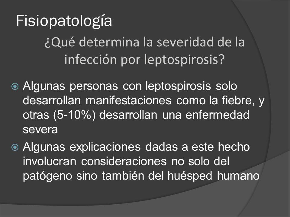 ¿Qué determina la severidad de la infección por leptospirosis