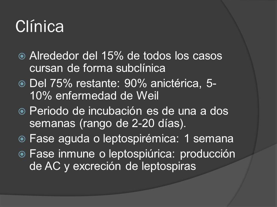 Clínica Alrededor del 15% de todos los casos cursan de forma subclínica. Del 75% restante: 90% anictérica, 5-10% enfermedad de Weil.