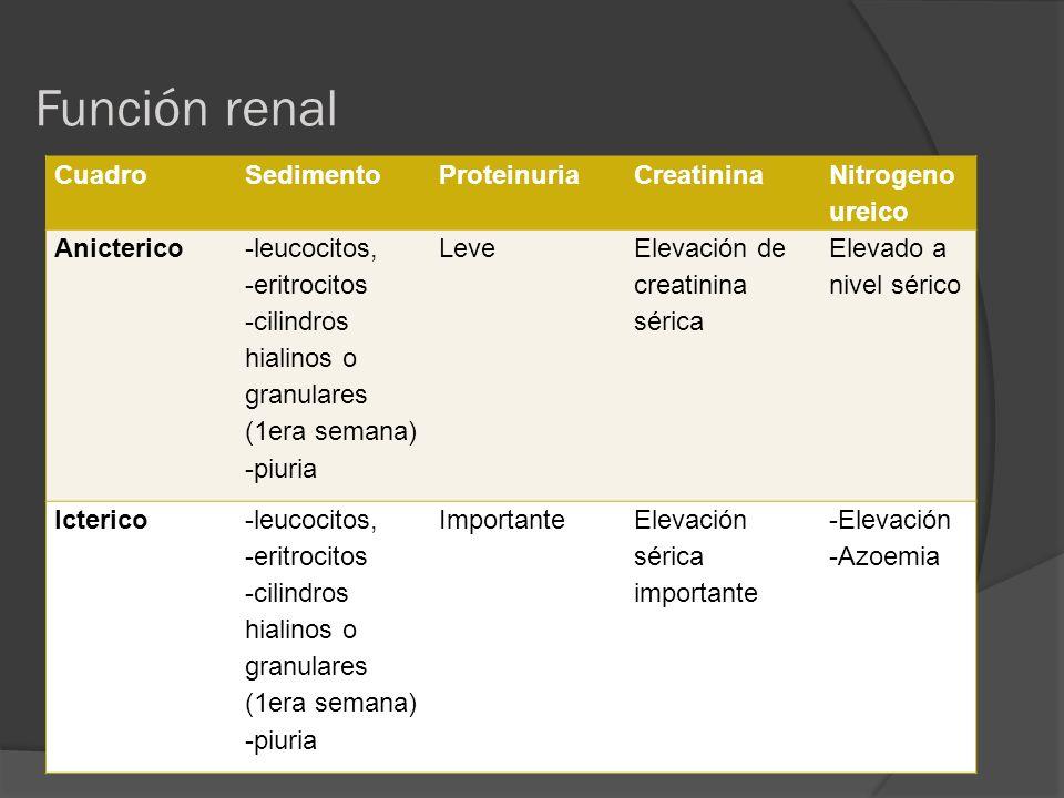 Función renal Cuadro Sedimento Proteinuria Creatinina Nitrogeno ureico