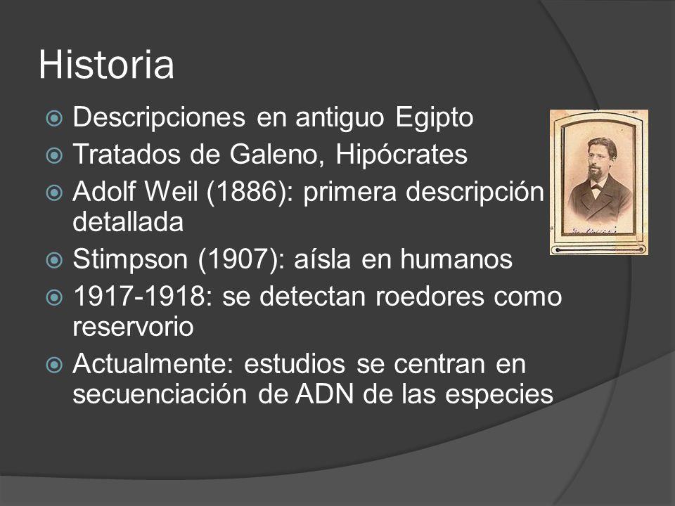 Historia Descripciones en antiguo Egipto