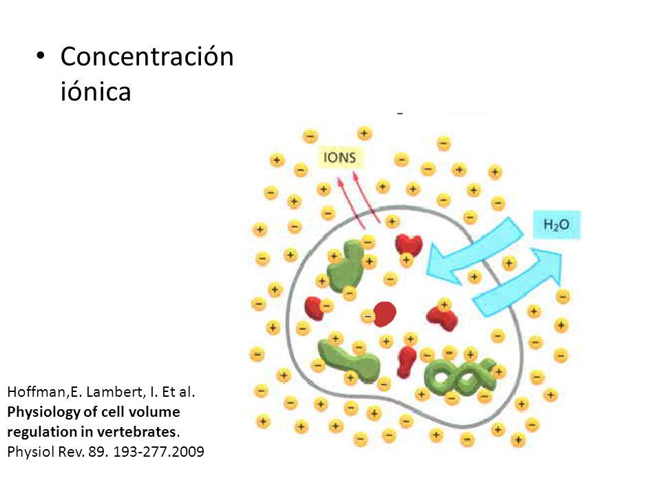 Concentración iónicaHoffman,E.Lambert, I. Et al.