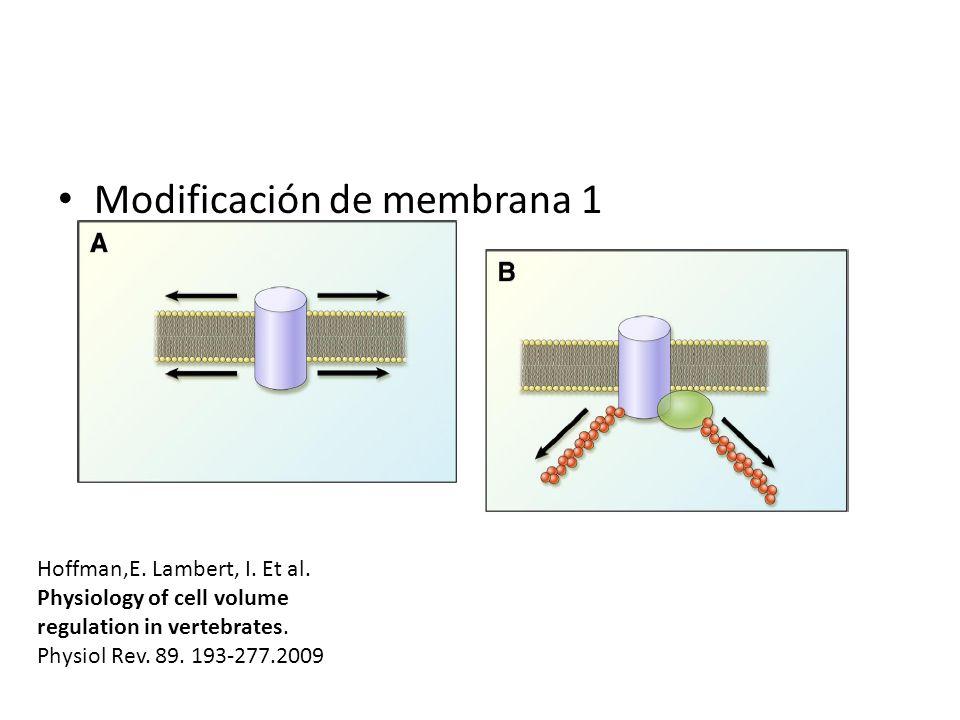 Modificación de membrana 1