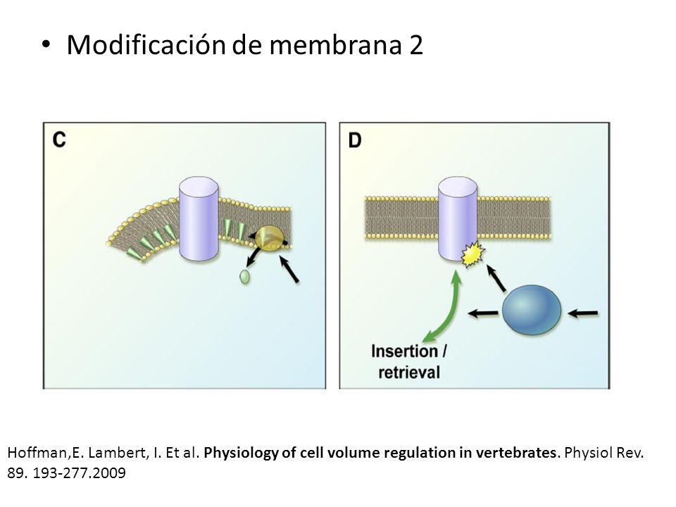 Modificación de membrana 2