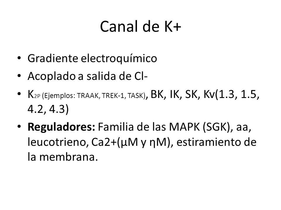 Canal de K+ Gradiente electroquímico Acoplado a salida de Cl-